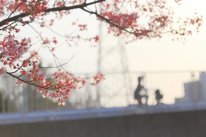 近所の桜_f0348831_20244968.jpg