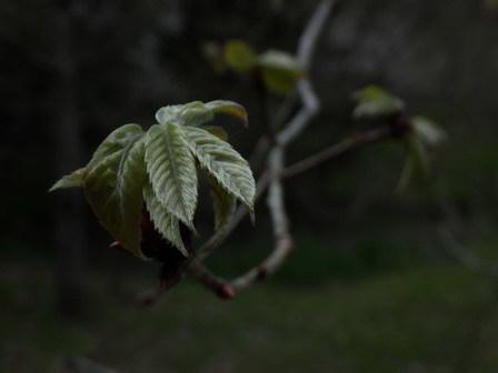 キランソウ咲く。スモモもアンズも、、。_a0123836_16120949.jpg