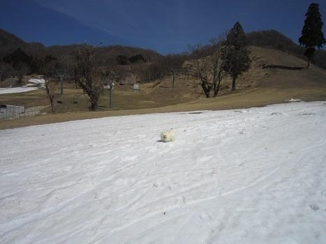 この冬最後の雪遊び~♪_b0177436_14073768.jpg