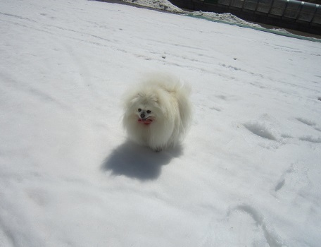 この冬最後の雪遊び~♪_b0177436_14101004.jpg