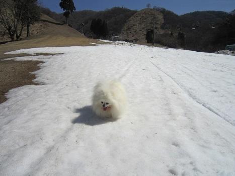 この冬最後の雪遊び~♪_b0177436_14122324.jpg