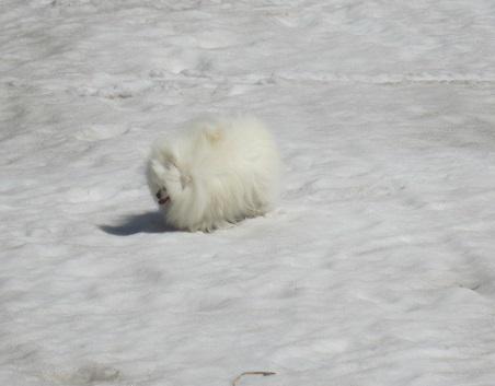 この冬最後の雪遊び~♪_b0177436_14125845.jpg