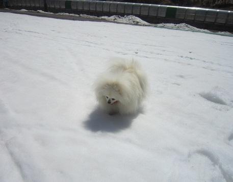 この冬最後の雪遊び~♪_b0177436_14174238.jpg
