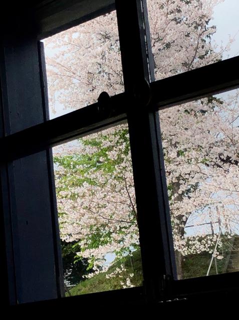 桜🌸本日オープンいたします_e0068042_09201129.jpg
