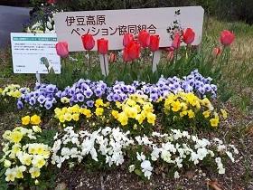 【伊東市 伊豆高原ペンション協同組合 婦人部(カモミ-ル)】_e0093046_10580454.jpg