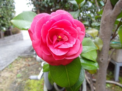 庭の花_c0394349_15382245.jpg