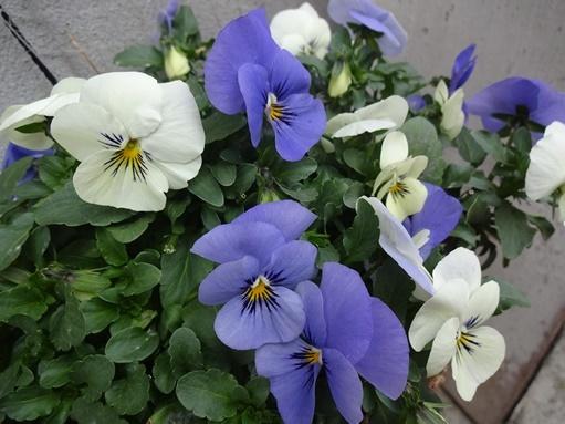庭の花_c0394349_15383039.jpg