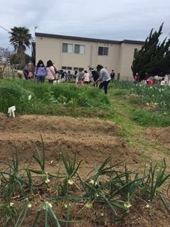 玉ねぎの収穫をしました!!_f0079749_19370131.jpg