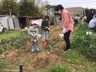 玉ねぎの収穫をしました!!_f0079749_19400613.jpg