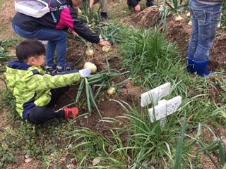 玉ねぎの収穫をしました!!_f0079749_19413338.jpg