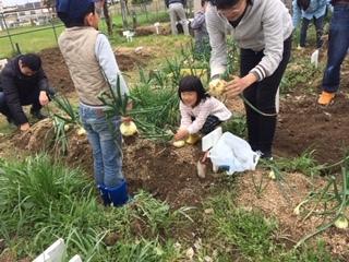 玉ねぎの収穫をしました!!_f0079749_19425232.jpg