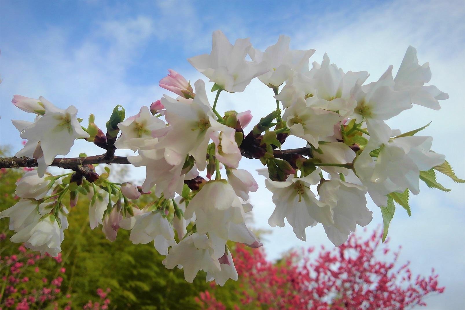 春のおとづれⅡ_c0141652_09130716.jpg
