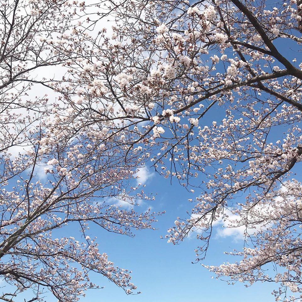 花のある暮らし_f0220152_20143024.jpg