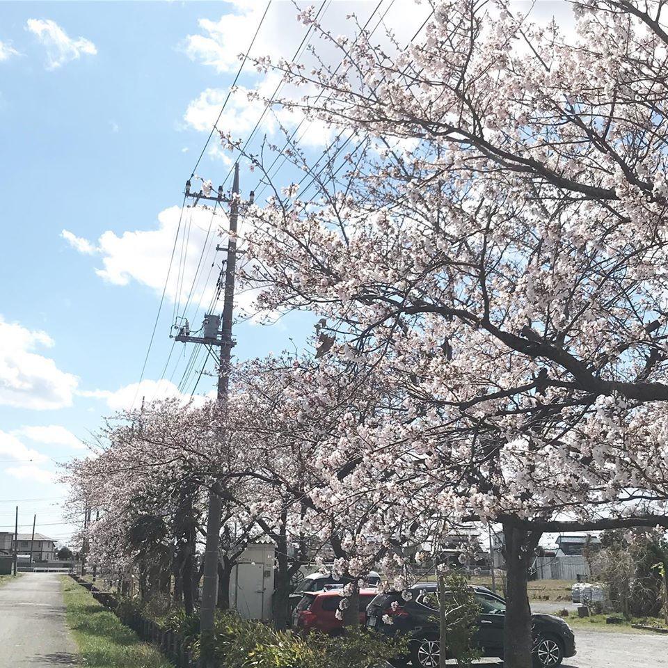 花のある暮らし_f0220152_20152780.jpg