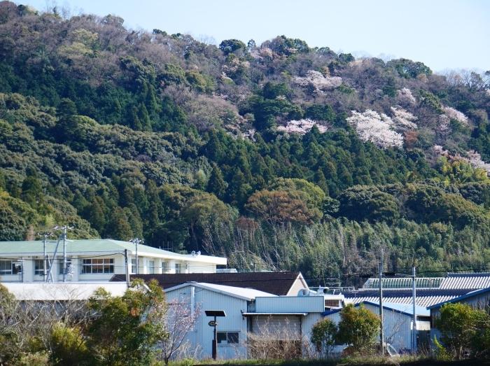 春の花咲く里山をゆく 1  2020-03-30 00:00   _b0093754_22560570.jpg