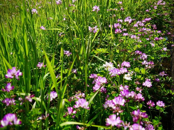 春の花咲く里山をゆく 1  2020-03-30 00:00   _b0093754_22563890.jpg