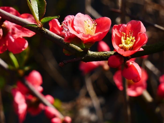 春の花咲く里山をゆく 1  2020-03-30 00:00   _b0093754_22572293.jpg