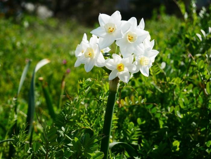 春の花咲く里山をゆく 1  2020-03-30 00:00   _b0093754_22574641.jpg