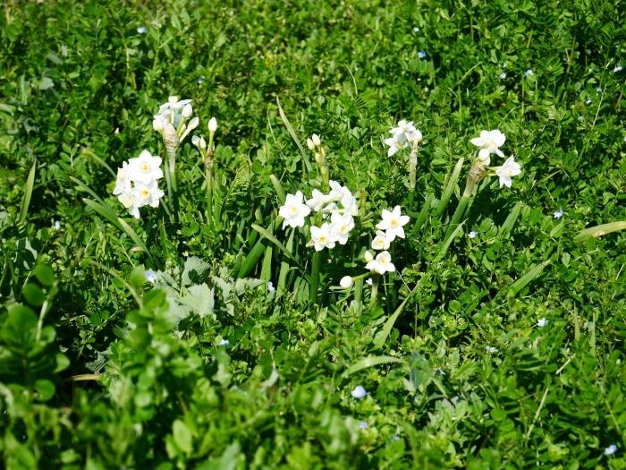 春の花咲く里山をゆく 1  2020-03-30 00:00   _b0093754_22575756.jpg