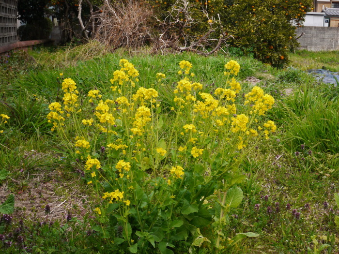 春の花咲く里山をゆく 1  2020-03-30 00:00   _b0093754_23283572.jpg