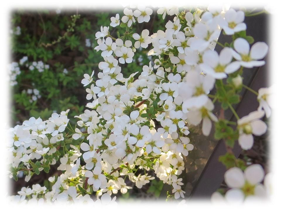 桜が咲き始めましたね。_c0185858_18091610.jpg