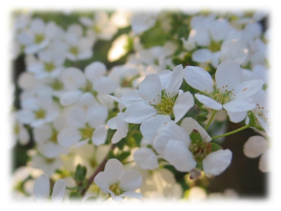 桜が咲き始めましたね。_c0185858_18092034.jpg