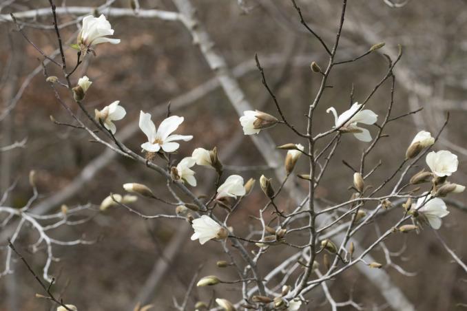 山にも春が_b0148762_08530324.jpg