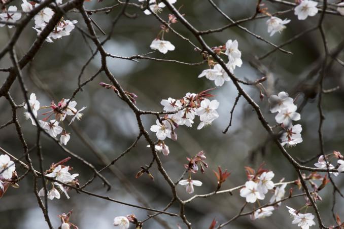 山にも春が_b0148762_08530863.jpg
