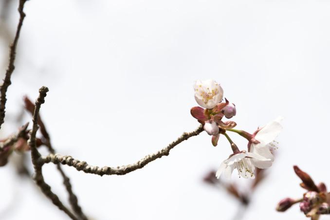 山にも春が_b0148762_08531318.jpg