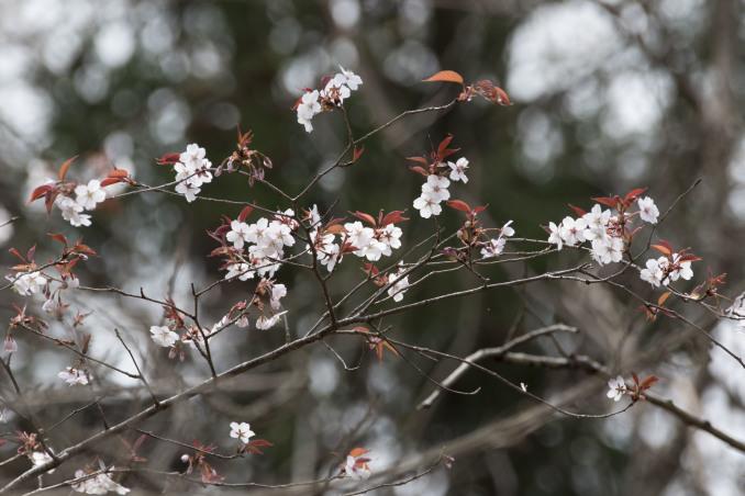 山にも春が_b0148762_08552836.jpg