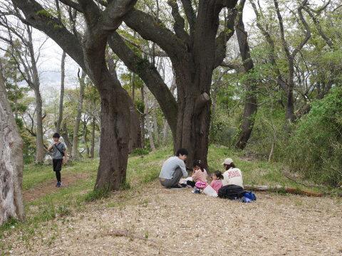 揃って葉桜、展望台周辺は7~8分咲き3・28六国見山夫婦桜now_c0014967_17362895.jpg