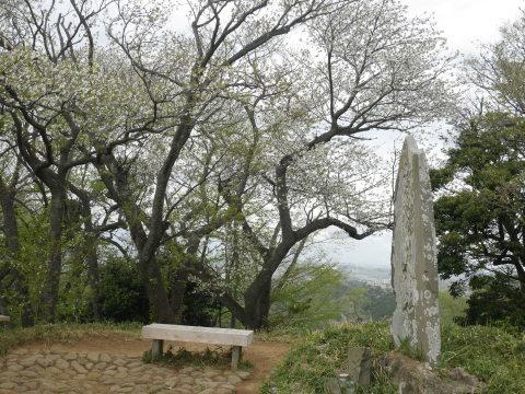 揃って葉桜、展望台周辺は7~8分咲き3・28六国見山夫婦桜now_c0014967_17392300.jpg