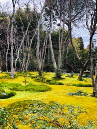 京都旅④~嵯峨野はひっそりとしてました_e0078071_16125871.jpg