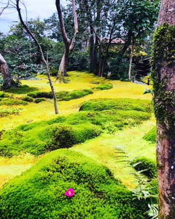 京都旅④~嵯峨野はひっそりとしてました_e0078071_16135072.jpg