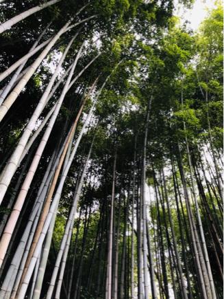 京都旅④~嵯峨野はひっそりとしてました_e0078071_16150929.jpg