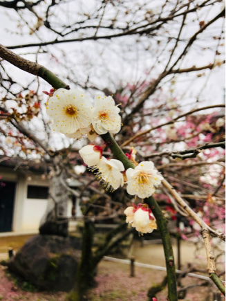 京都旅④~嵯峨野はひっそりとしてました_e0078071_18051431.jpg