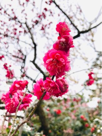 京都旅④~嵯峨野はひっそりとしてました_e0078071_18051581.jpg