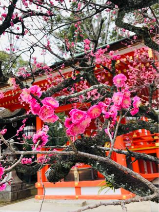 京都旅④~嵯峨野はひっそりとしてました_e0078071_18051659.jpg