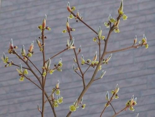 小さき庭にも春が_b0102572_09460300.jpg