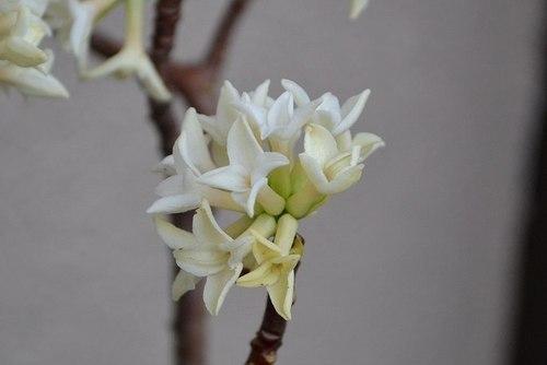 小さき庭にも春が_b0102572_09462775.jpg
