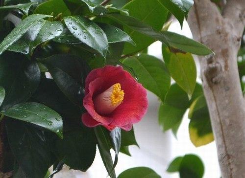 小さき庭にも春が_b0102572_09471443.jpg