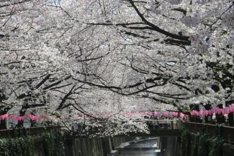桜_e0292172_08284330.jpeg