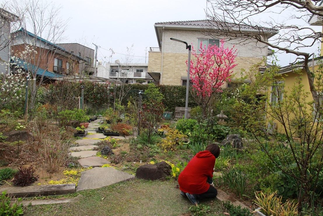 花桃の周りには_a0107574_15481924.jpg