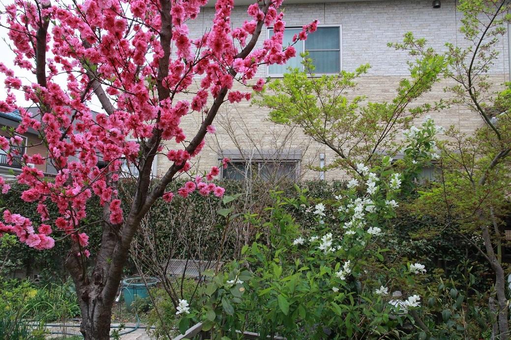 花桃の周りには_a0107574_15483793.jpg
