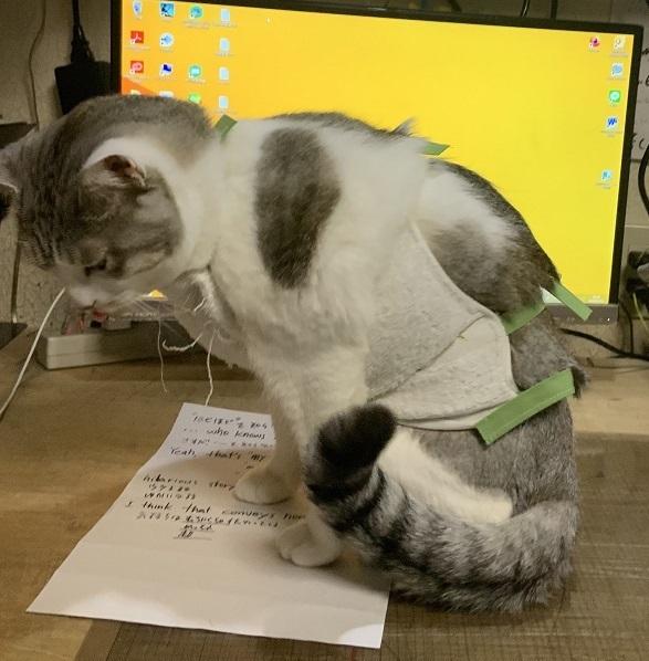 猫のおなか_b0019674_02071788.jpg
