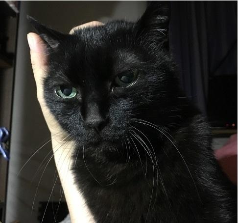 猫のおなか_b0019674_02271525.jpg