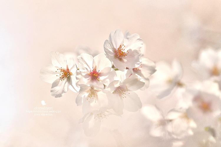 love letter_c0319774_00495202.jpg