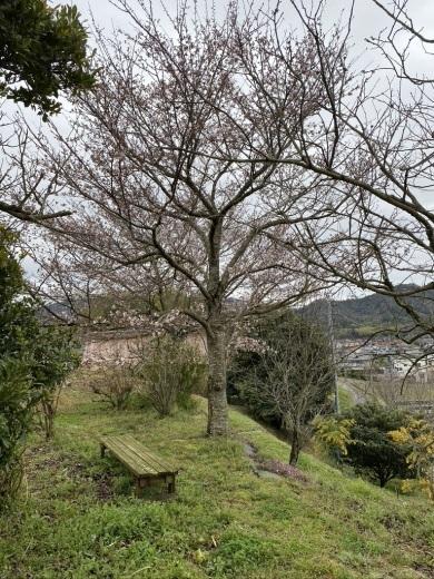 裏山の桜だより② 〜2020〜_c0334574_19033059.jpeg