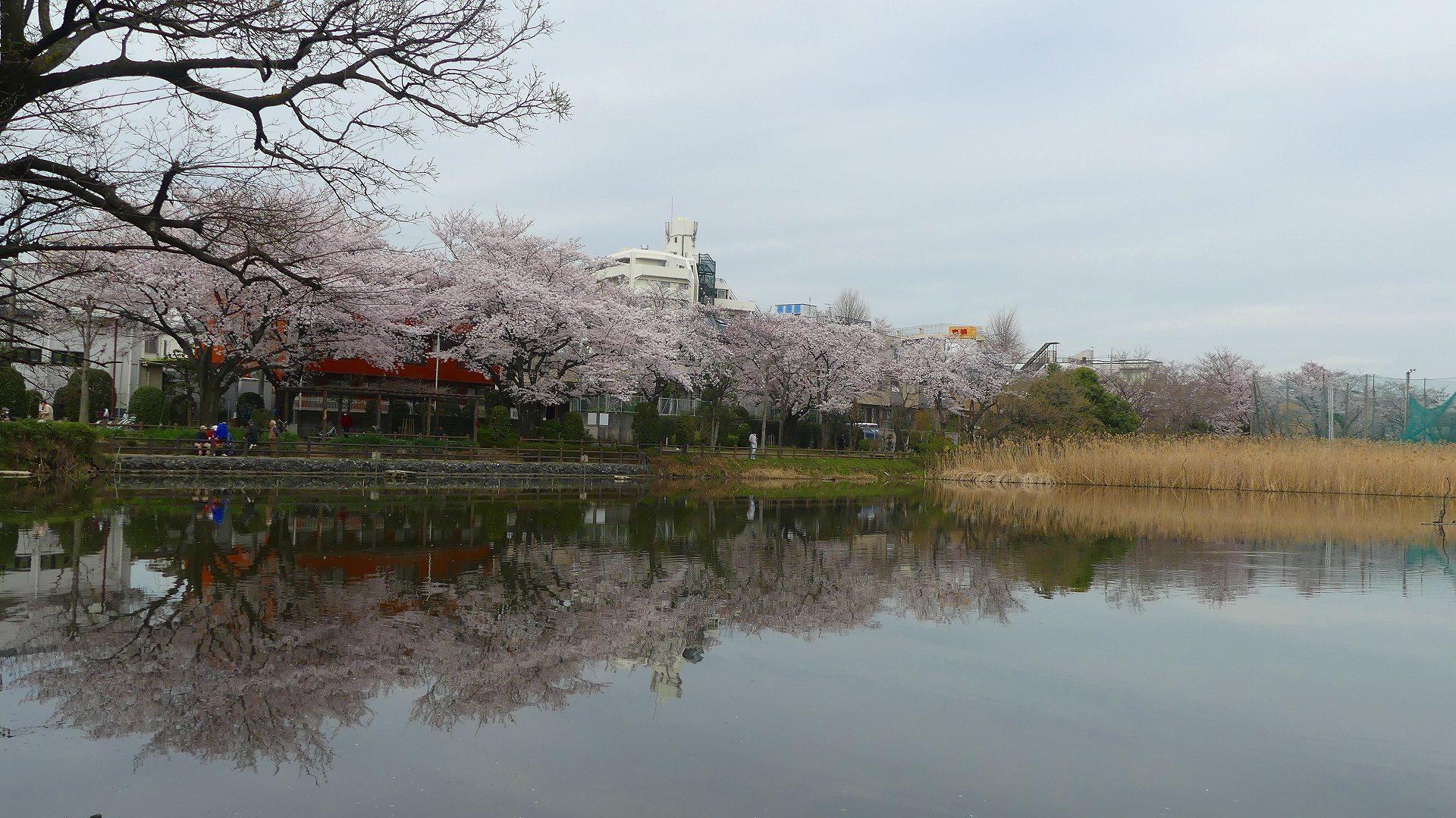 季節がくれば花は咲く_a0185081_11334716.jpg