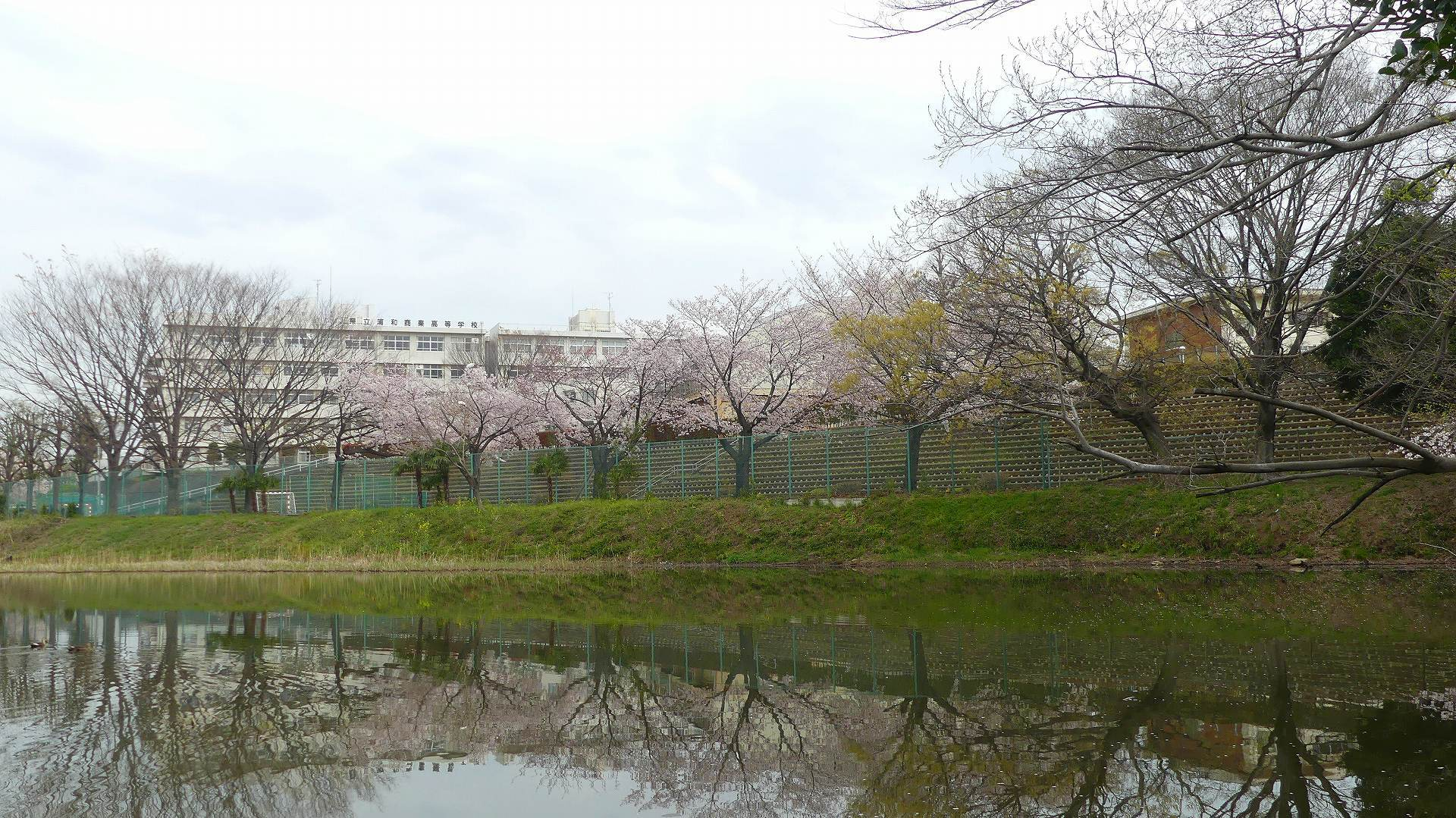季節がくれば花は咲く_a0185081_11340413.jpg